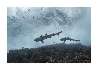 Reef Patrol