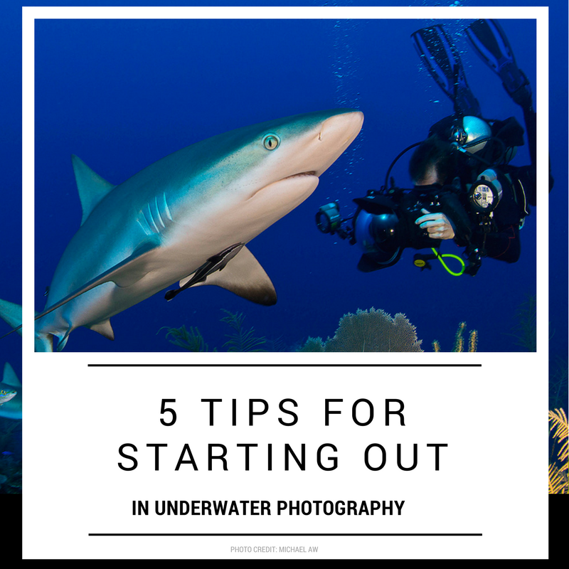 5 tips for starting out in underwater photography